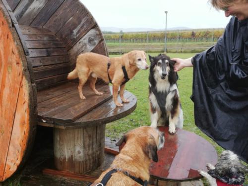 lassie hundeschule