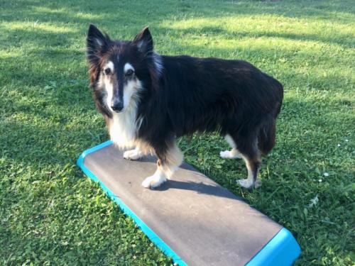 lassie steppbrett